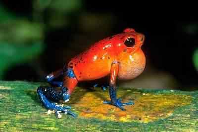 animal frogs 3 Top seres coloridos