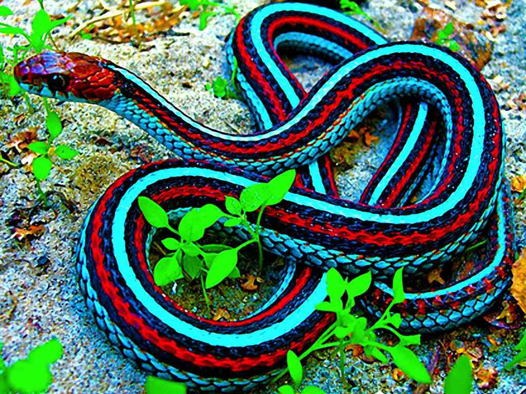 colored snake 1024x768 Top seres coloridos