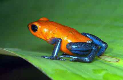 coolest 2dcolored 2dfrogs03 small Top seres coloridos