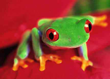 coolest 2dcolored 2dfrogs04 small Top seres coloridos