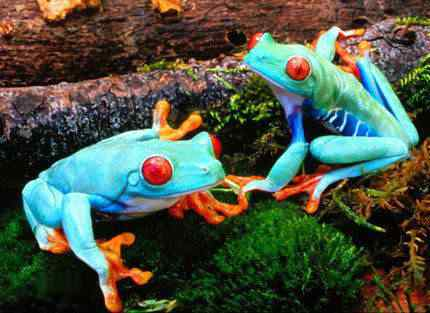 coolest 2dcolored 2dfrogs05 small Top seres coloridos