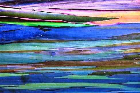 eucalipto arcoiris 10 Top seres coloridos