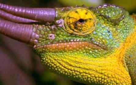 nature img pe 1 Top seres coloridos