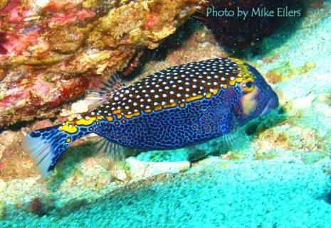 parrot fish maui hawaii Top seres coloridos
