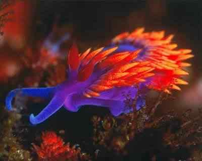 sea slug 2 Top seres coloridos