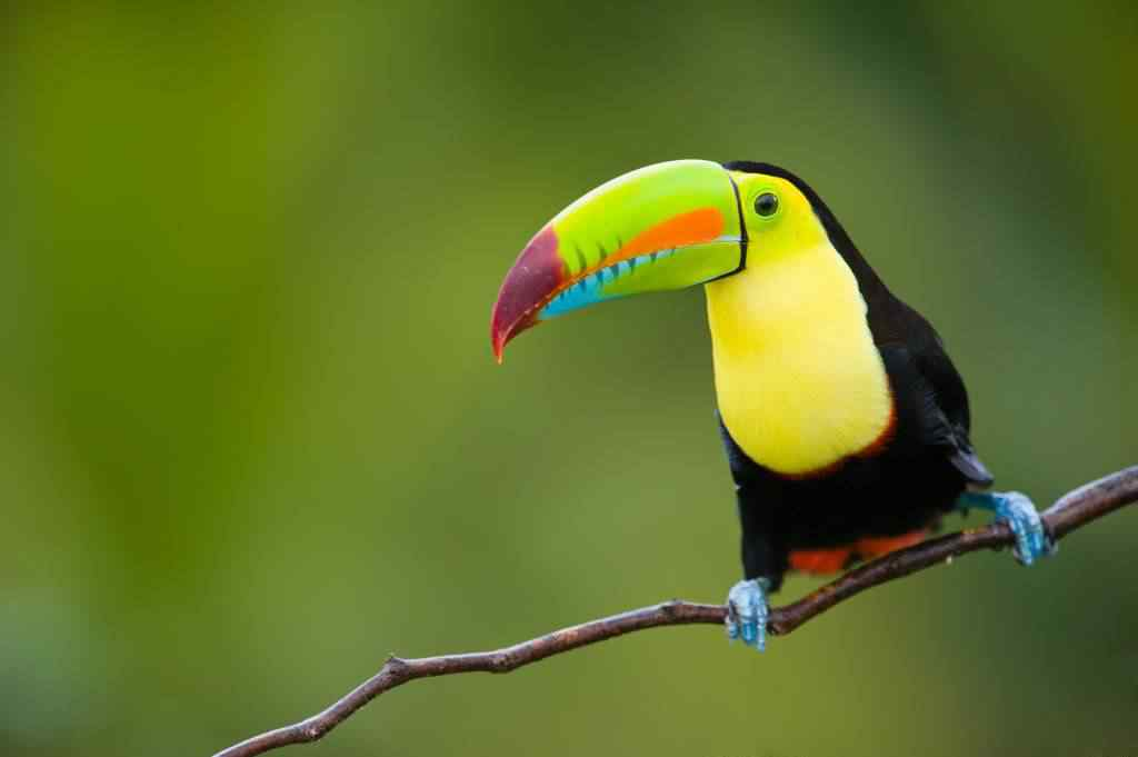 shutterstock 57453022 toucan 1024x681 Top seres coloridos