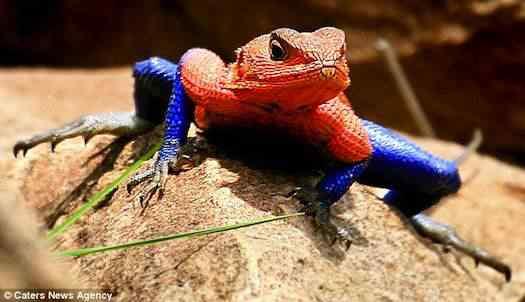 spiderman lizard Top seres coloridos