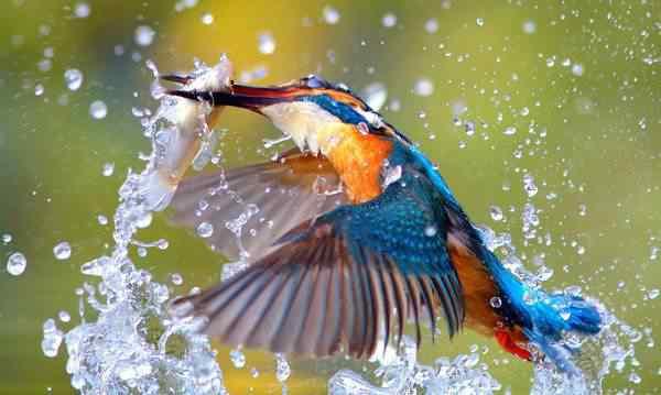 szutsao em taiwan martim pescador Top seres coloridos