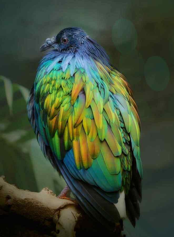 tumblr mgvradIOrN1qd3lmco1 1280 Top seres coloridos