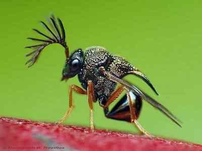 3458974706 96599a92ec1 A vespa louva deus e outras vespas bizarras