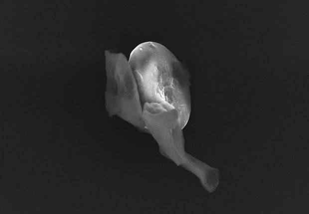 Fotografia divulgada nesta sexta-feira (20) pela Universidade de Sheffield mostra o que um grupo de cientistas britânicos considera uma partícula de vida do espaço. Eles acreditam ter encontrado provas da existência de vida fora da terra  (Foto: EFE/Universidad de Sheffield/Ho)