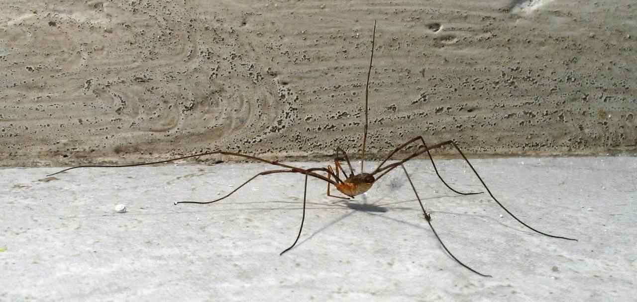 Isso não é uma aranha!