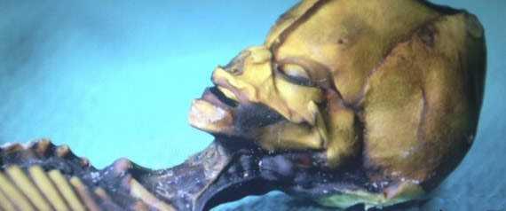 ET_Atacama_Desert_Chile_Real_Alien_Skull_Close_up_Photo-1md