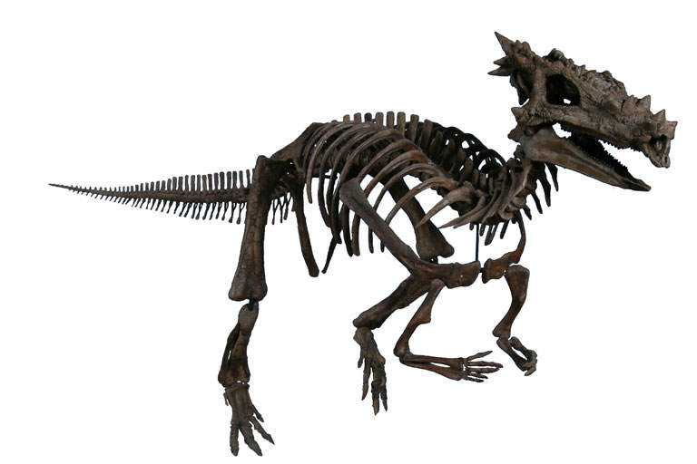 The_Childrens_Museum_of_Indianapolis_-_Dracorex_skeletal_reconstruction