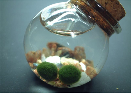Japans-Cool-Summer-Getaway-Lake-Akan-marimo-1