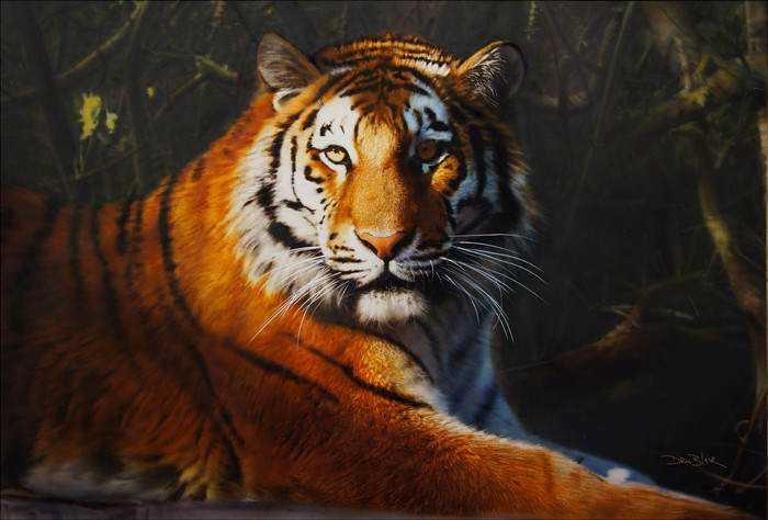 junglecat_1024x1024