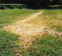 estranha marca no quintal de Kathie Davis surgida em 30 de junho de 1983. Esta fotografia foi obtida logo após o seu aparecimento. A marca circular tinha 2,40m de diâmetro e um sulco de 14,70m de comprimento por 90 cm de largura.