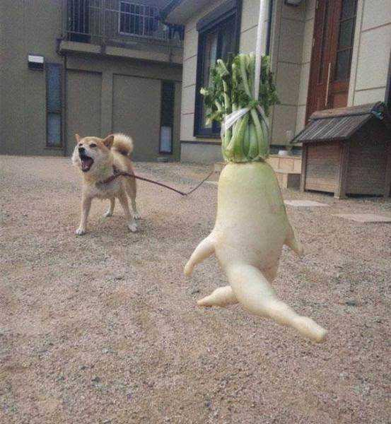 vegetables_that_are_desperately_trying_to_be_something_else_640_19