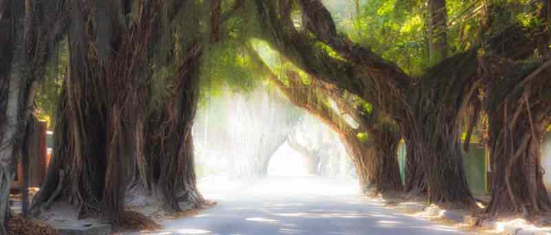 O triste fim de uma árvore