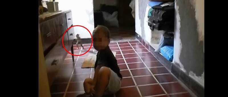 Gnomo ou goblin aparece correndo em video argentino. Será 171?
