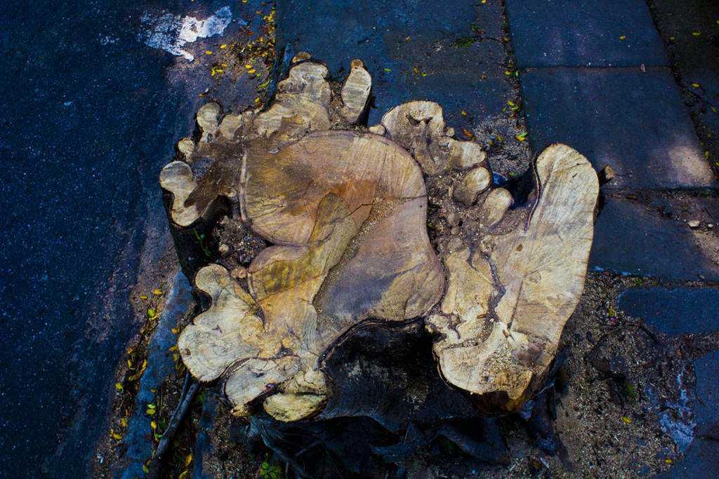 crueldade2 low O triste fim de uma árvore