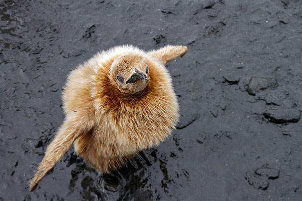 cute-fluffy-animals-353