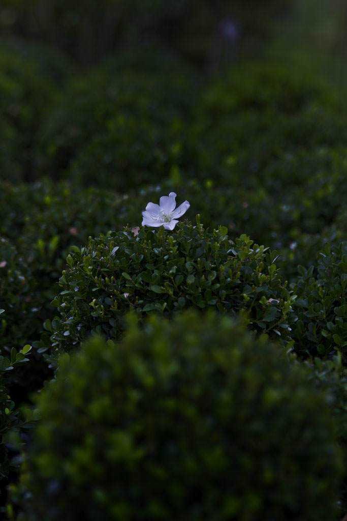 flor branca em detalhes