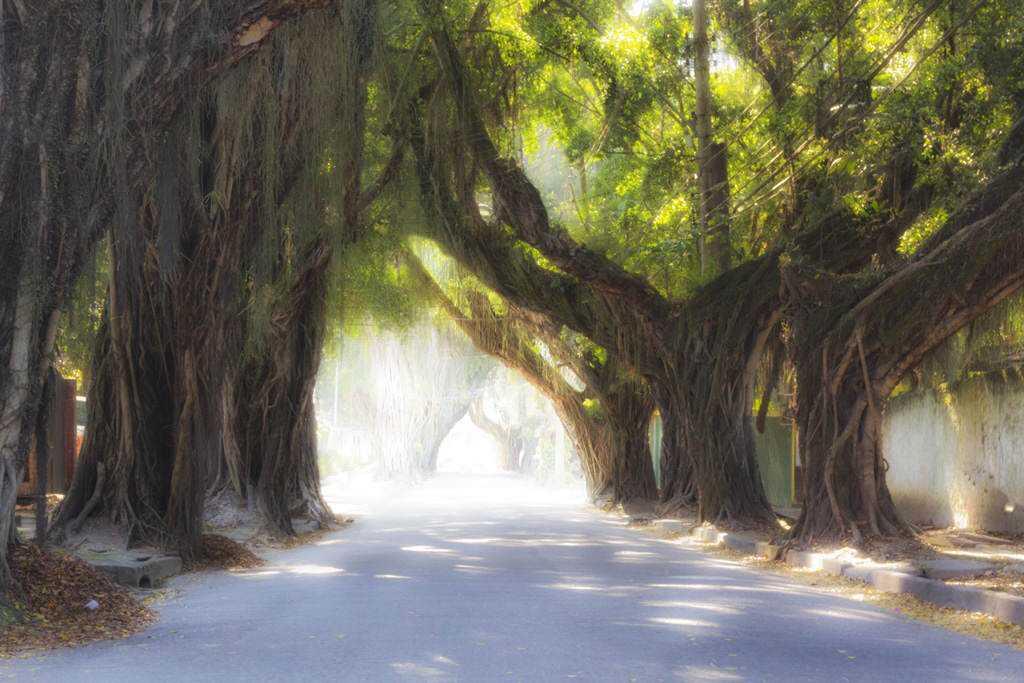 rua das arvores low O triste fim de uma árvore
