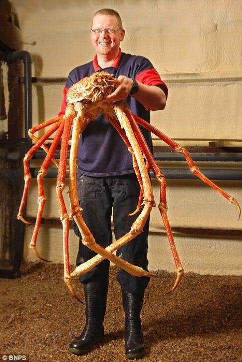 worlds-biggest-crab