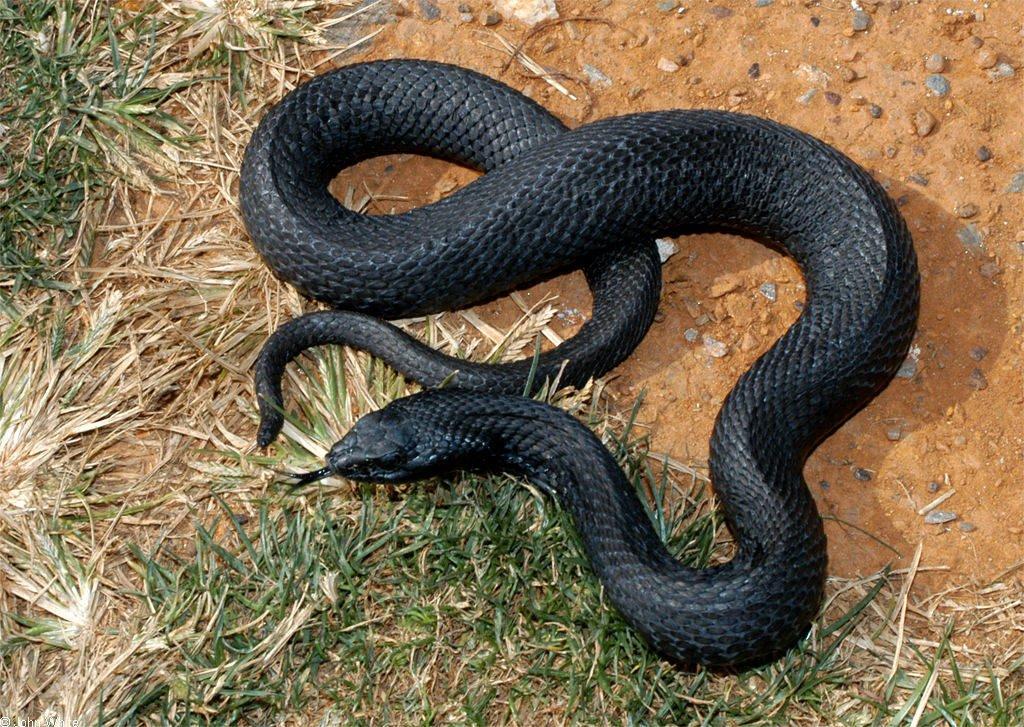 %name Incríveis animais pretos