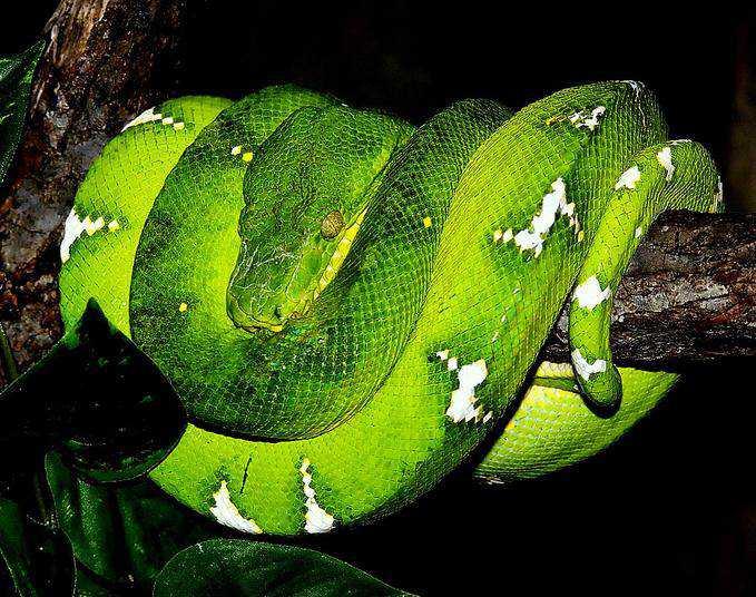 10052943 md Dez cobras lindas