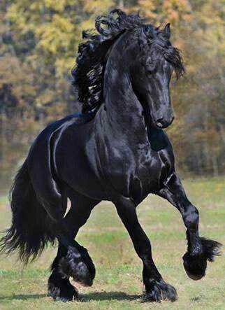 4953e04067f51f07b1618819c5f3ff26 Incríveis animais pretos
