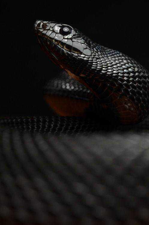 5f8df0a5116af229cd1d24d19f3d079b Dez cobras lindas