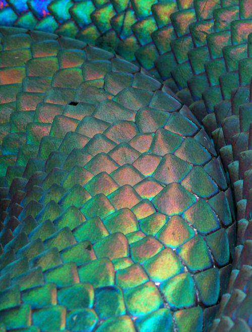 810b5757c35c267a1f52cec54803d55c Dez cobras lindas