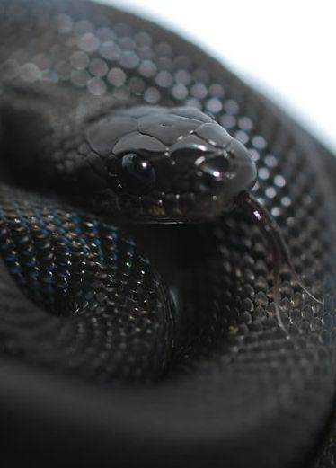 9b886b50333ff60cd021a8acb5757550 Dez cobras lindas