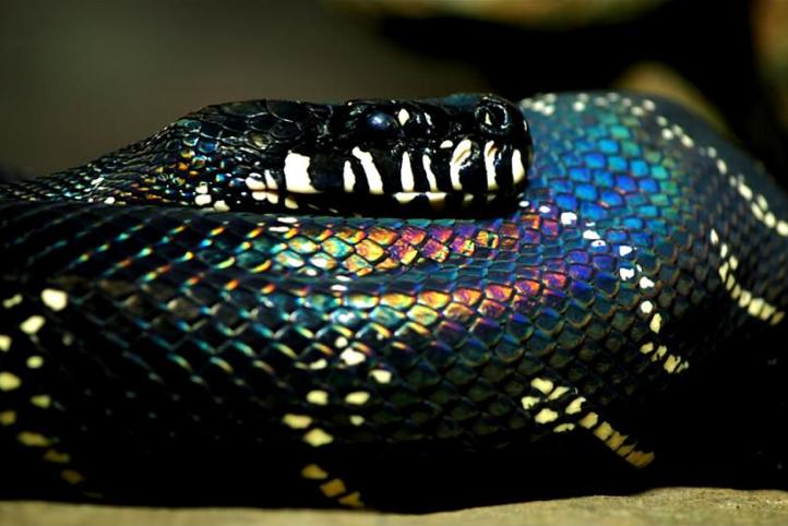Screen shot 2011 05 17 at 3.52.06 PM2 Dez cobras lindas