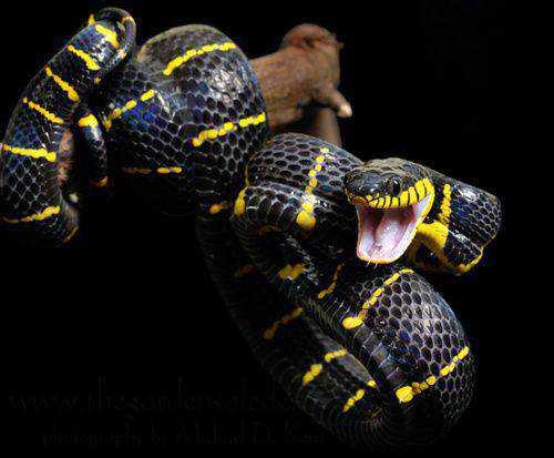 cbb5d3c3ea893b3d8528c7ff69ceafe8 Dez cobras lindas