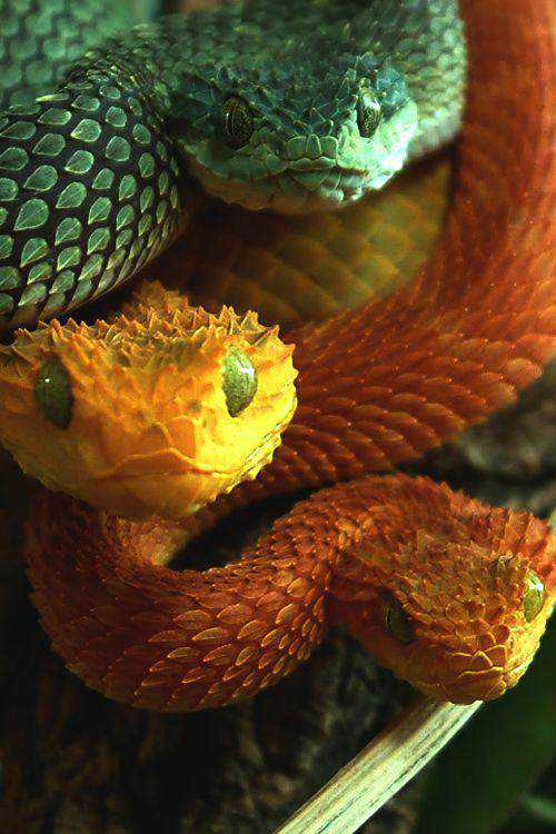dfd451057e07942a8953499547a64993 Dez cobras lindas