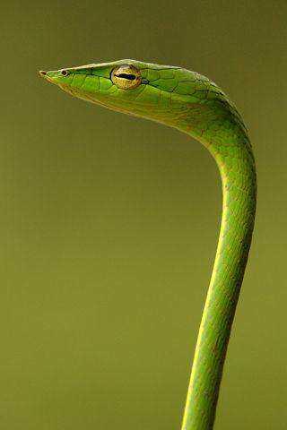 e701932abc11e654ba90633cdefdd88f Dez cobras lindas