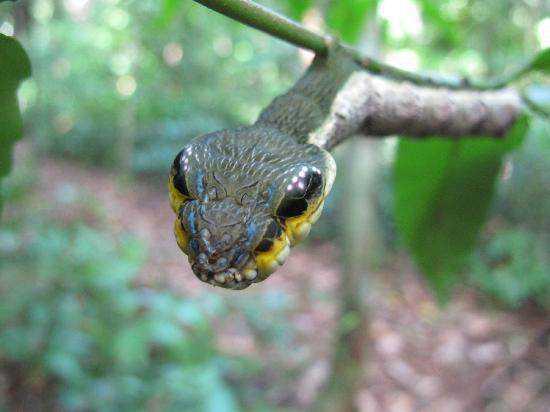 sanke caterpillar tours Dez cobras lindas