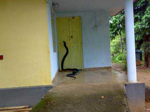 snake door e1415812623791 Dez cobras lindas