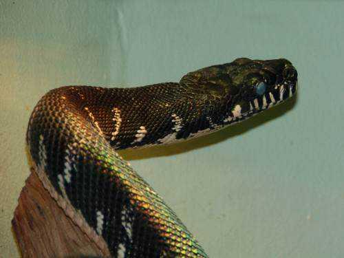 toz17764l e1415813247345 Dez cobras lindas