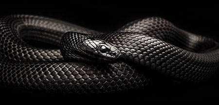 tumblr mb6eijQR501r83k2io3 500 Dez cobras lindas