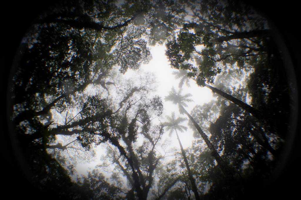 Teto da floresta_low