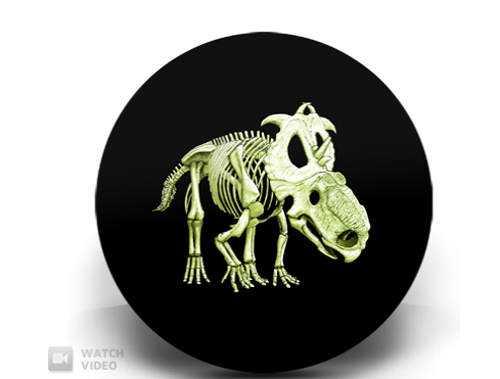 Dinosaur-Coin