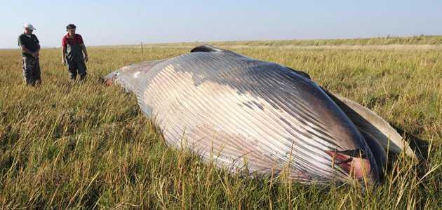 whale1_144523