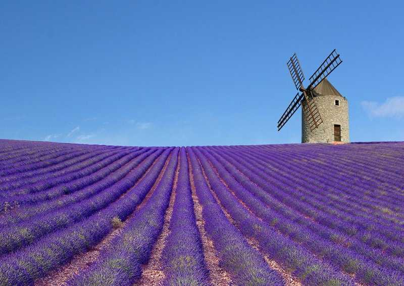 ?????????? ???? ???????? ??????????? ? ????? ?? ??????? ???? ??????? ???????? ??? ?????????? ???? ???  Lavender fields Provence Travel and Recreation in France ????????? - ?????????? ??????? ? ???????? ?? ???-??????? ???????, ??????? ???????? ?????? ??????????? ??????, ???????????? ???????? ? ???? ? ?????? ??????? ????????? ?????? ??????? ?? ?????? ????? ????. ????? ????????? ???????? ????:   http://goo.gl/Ebj2wp