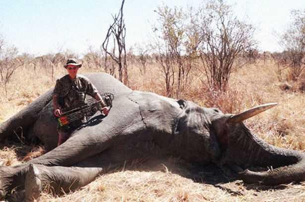 2012_dr_jan_seski_elephant_web