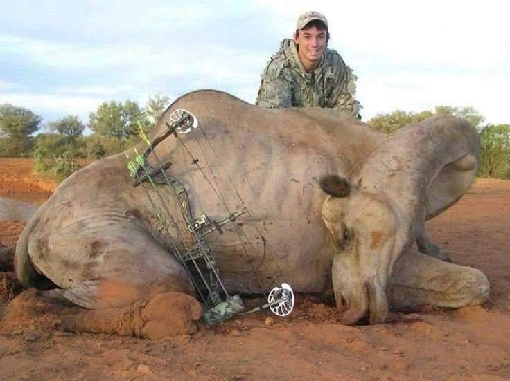 child-trophy-hunters-camel6