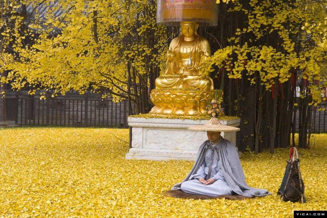 0 19db94 ffa9c587 orig Foto Gump do dia: O esplendor da Árvore de Ouro, na China